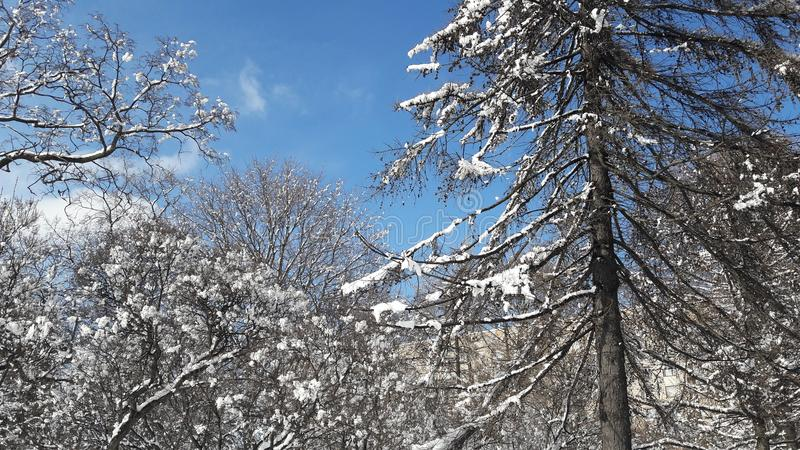 Winter in Russland lizenzfreie stockfotos