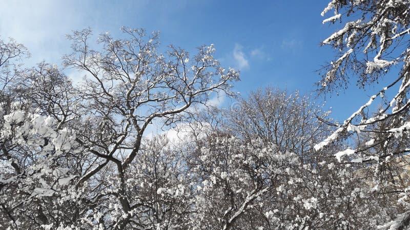 Winter in Russland stockfotos
