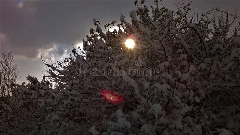 A Winter`s Darsena Garden stock photo