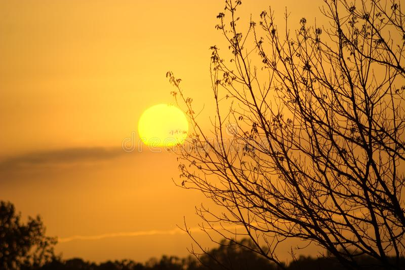 Sunset on winters day with tree silhouette. The winter`s setting sun with the silhouette of the outstretched branches of a tree. A calm serene scene, part of royalty free stock photography