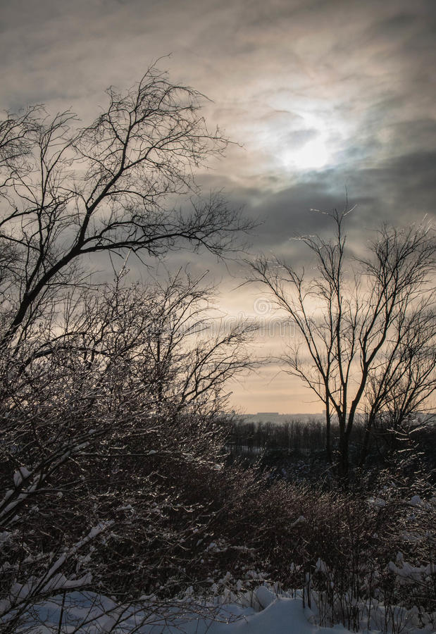Winter's tale royalty free stock photo
