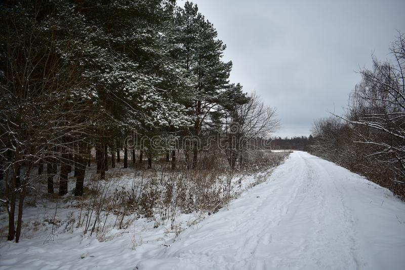 Winter`s tale in the forest. Winter forest and road. Winter forest, trees, nature is quiet, calm and serene, only a howling breeze breaks the silent silence stock photography