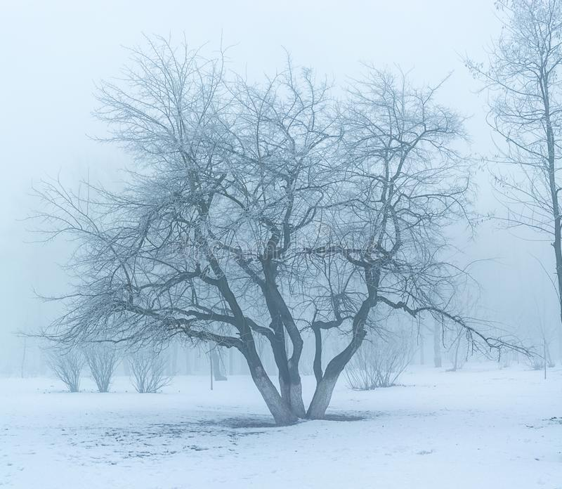Winter`s tale. Winter landscape, trees in the frost . the image is made up of many photos stock images