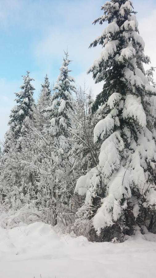 Winter& x27; s vilar royaltyfria foton