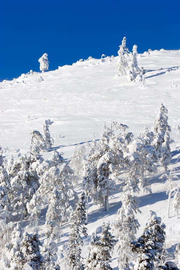 Download Winter Scene Royalty Free Stock Image - Image: 13076596