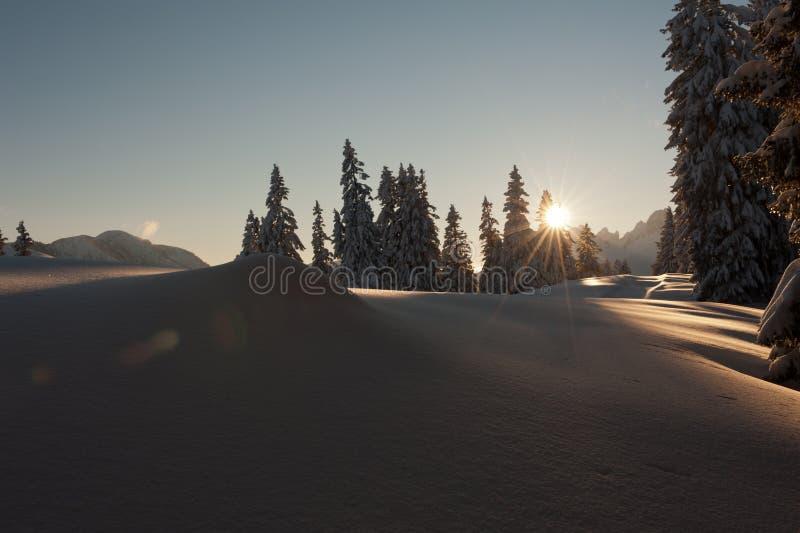 Download Winter scene stock photo. Image of bright, pines, sundown - 28095134