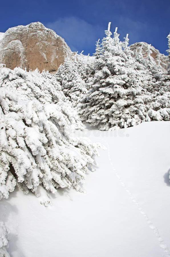 Download Winter scene stock photo. Image of landscape, cover, traditional - 29055750