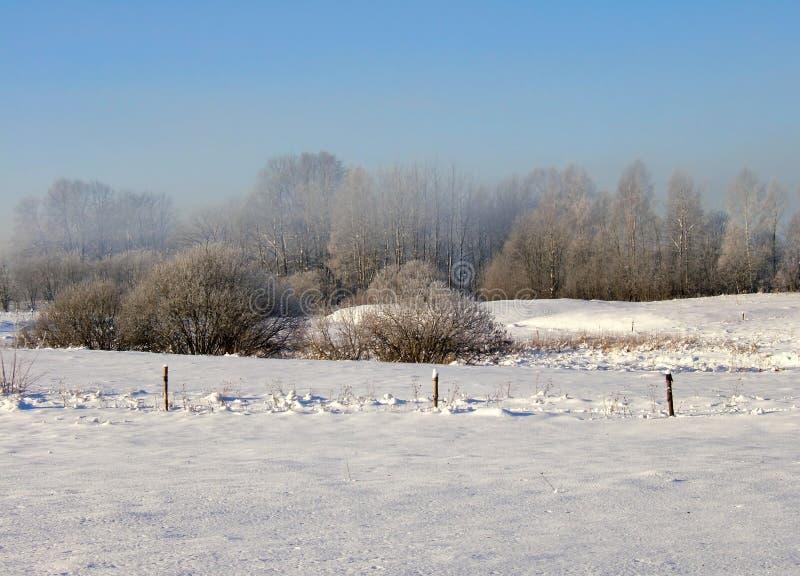 Download Winter scene stock image. Image of north, bushes, blue - 464853