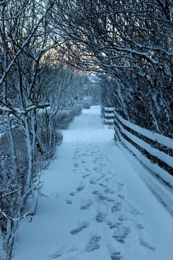 Download Winter scene stock image. Image of frosty, walk, december - 521961