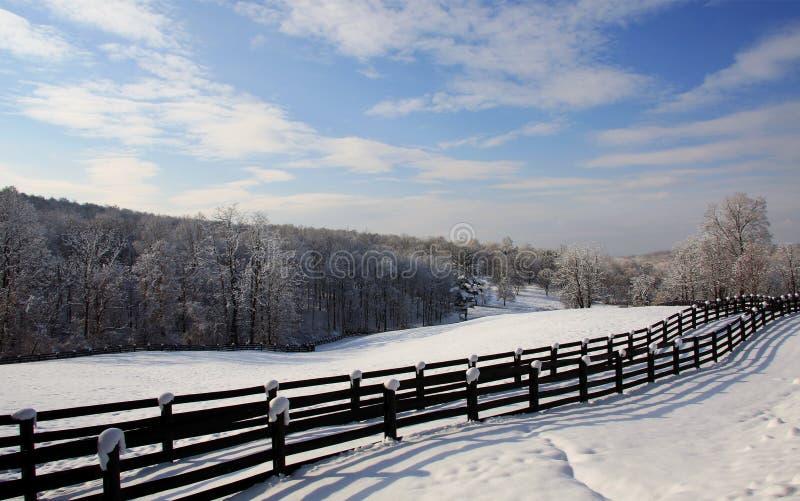 Winter Scene 7120 royalty free stock image