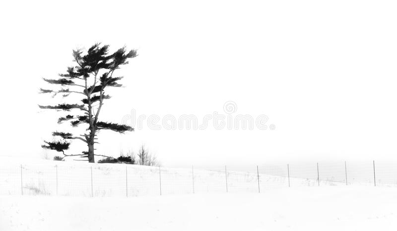 Winter Scene Abstract royalty free stock images