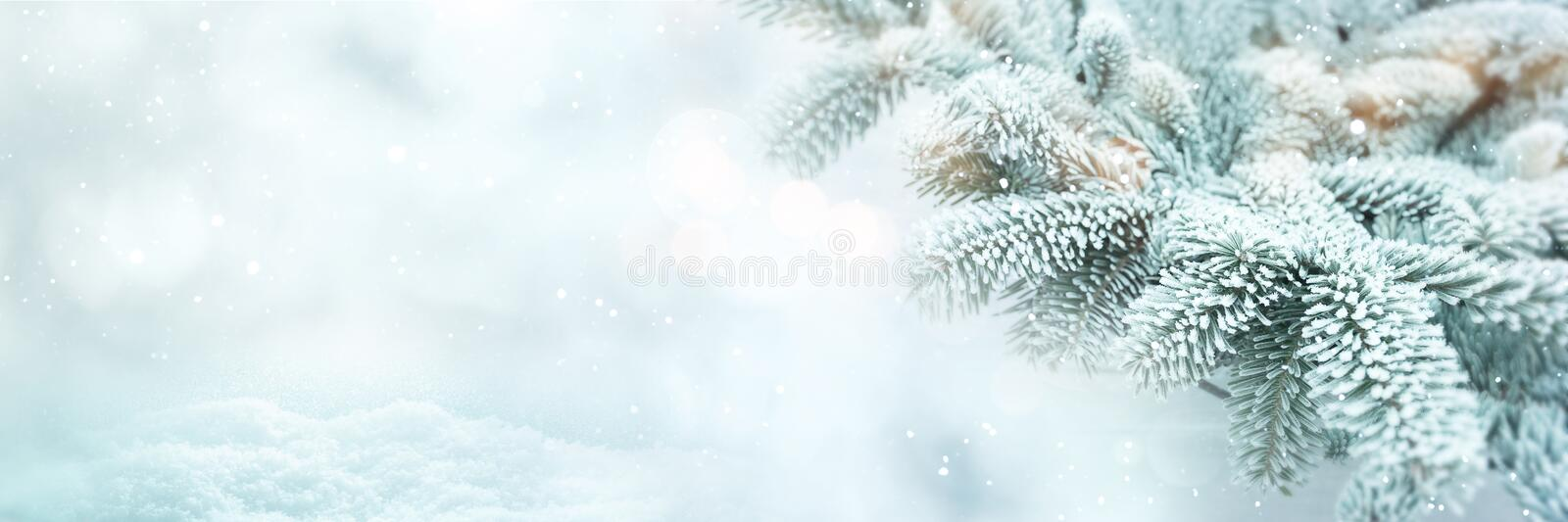 Winter scene background with fir branches stock photography