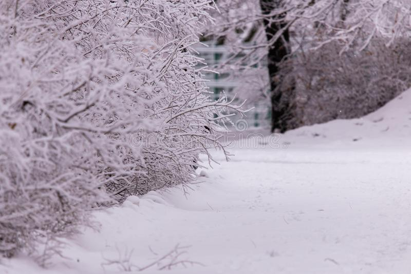 Winter scene background, oak forest covered with frost stock photo