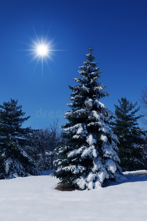 Winter scene with bright sun stock images