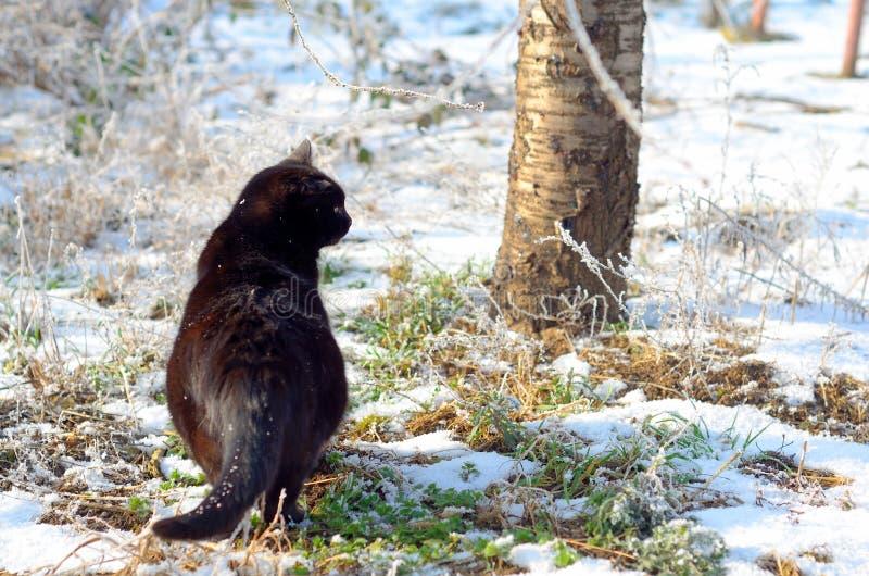 Winter scene. Cat in a sunny frozen garden. royalty free stock photos