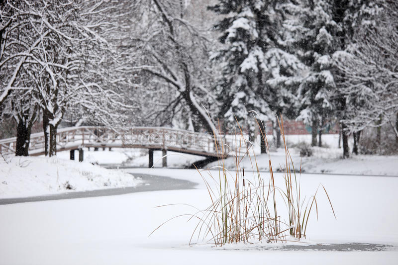 Download Winter Scene From The City Park Stock Image - Image: 17570129