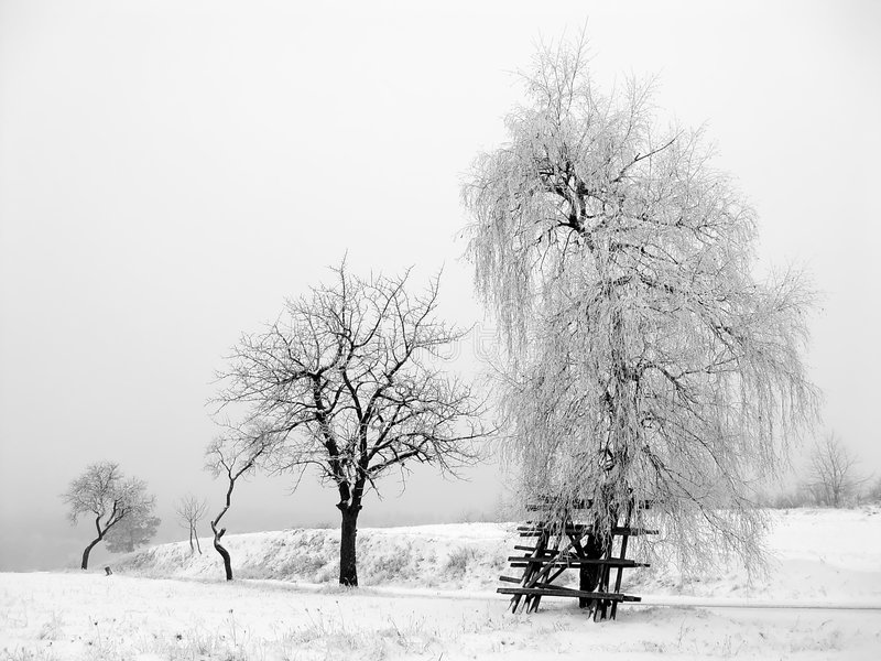 Winter Scene - frost trees royalty free stock image