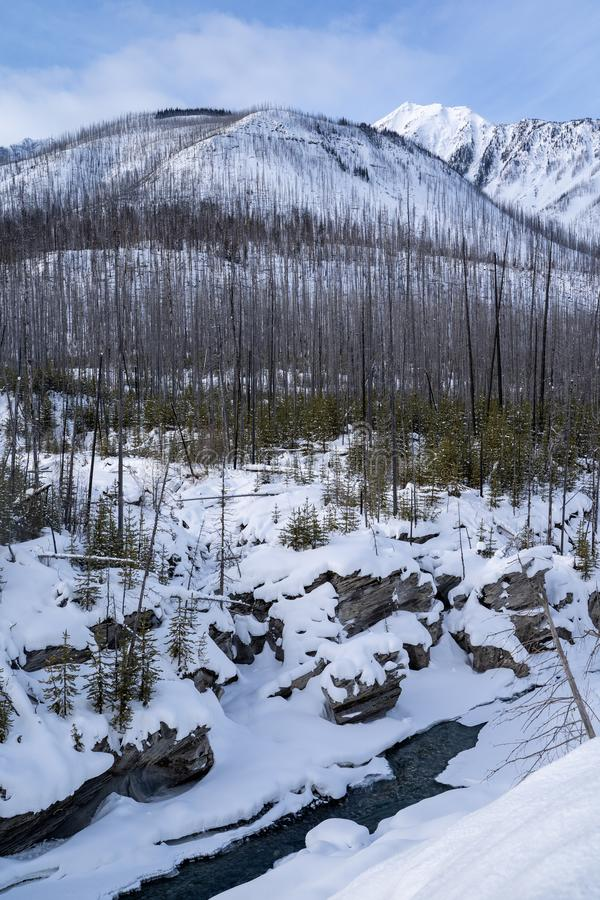 Winter scene in Kootenay National Park with burned forest fire trees, the Kootenay River and Canadian Mountains, all covered in royalty free stock image