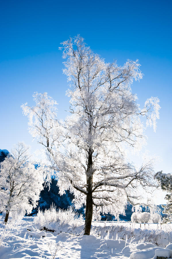 Download Winter Scene From Norway Stock Images - Image: 10416244