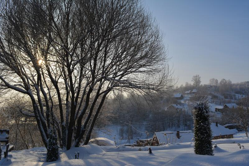 Winter scene with picturesque tree on the background of snowy landscape stock images