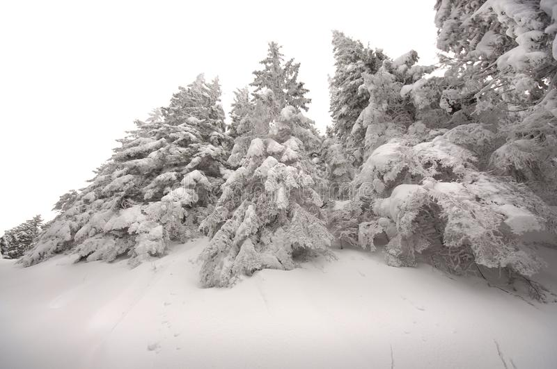 Beautiful Winter Scene Images Download 231 781 Royalty