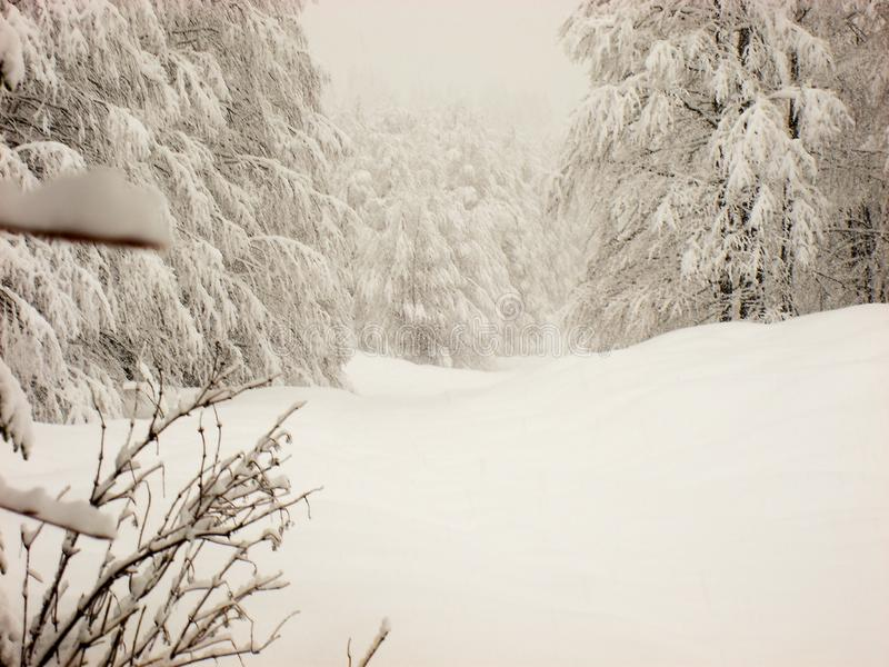 Winter scene of smooth snow, and snow covered trees and light fog. Mountain hills with smooth soft blanket of snow and tree and pines covered with white snow royalty free stock photography
