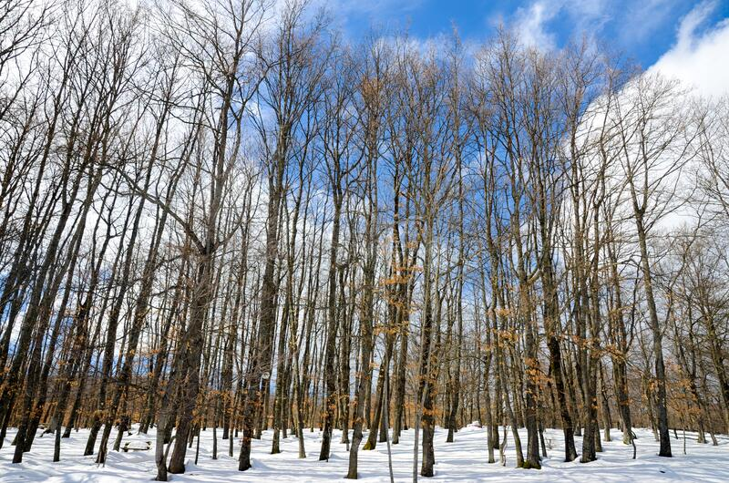 Winter scene with snow and ice covered trees on mountain. Beautiful Snowy Day in forest in January. Winter landscape and snowy for. Est. Trees covered with snow royalty free stock photo