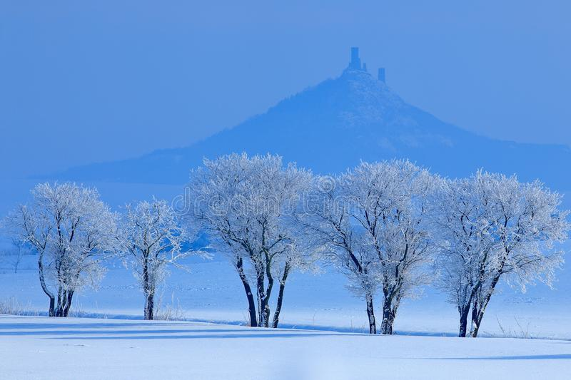 Winter scene with snow and trees. Hazmburk gothic castle on rocky mountain, hill landscape in Ceske Stredohori, Czech republic. Co stock images