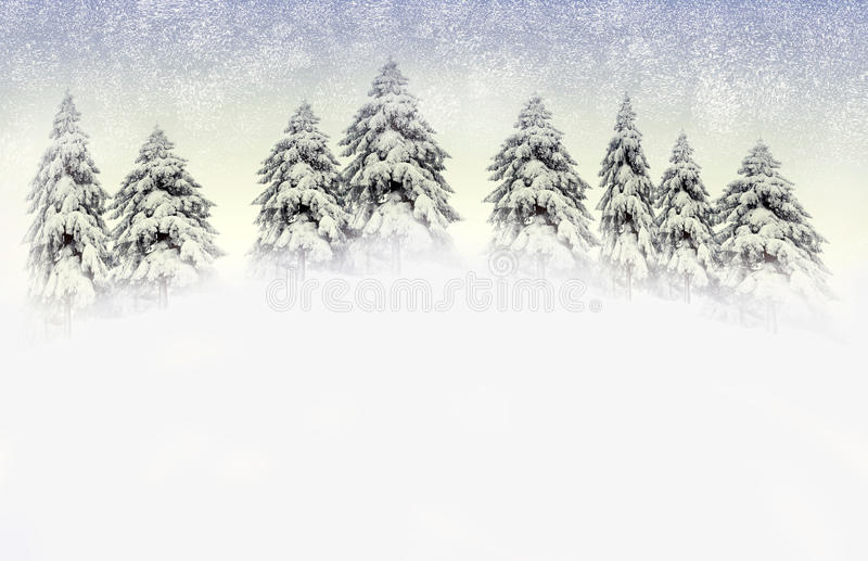 Winter scene with snowy pines royalty free stock images