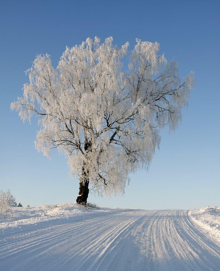 Winter scene with Tree stock photos