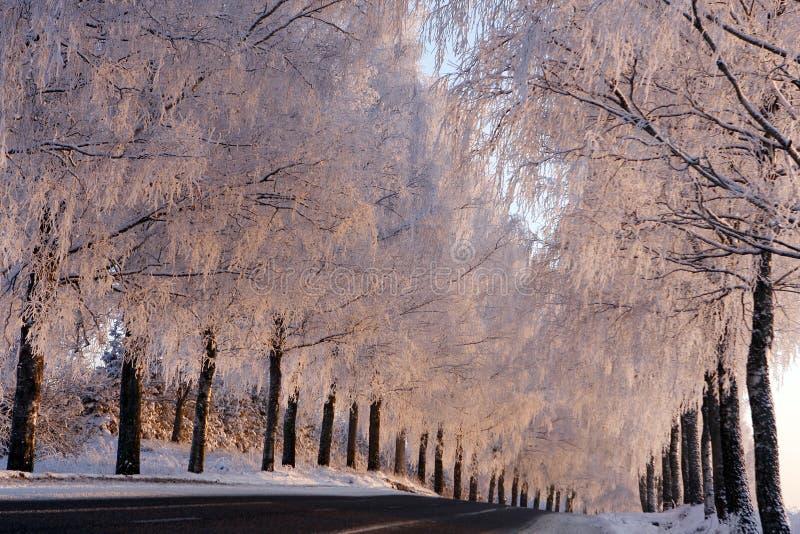 Winter scene with Trees stock photos