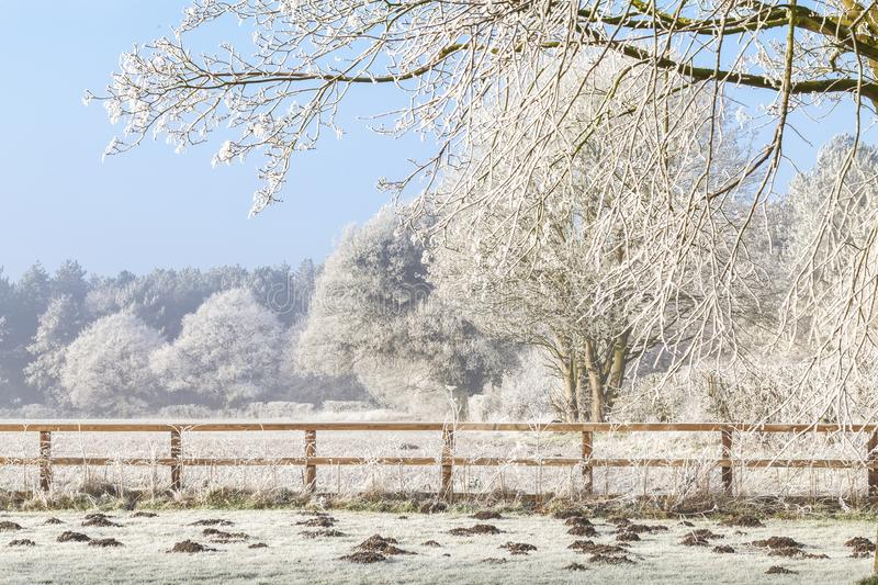 Winter scene with trees fence and mole hills. Beautiful rural winter scene with heavy frost on trees and a two rail wooden fence. Clear blue sky and frozen royalty free stock images