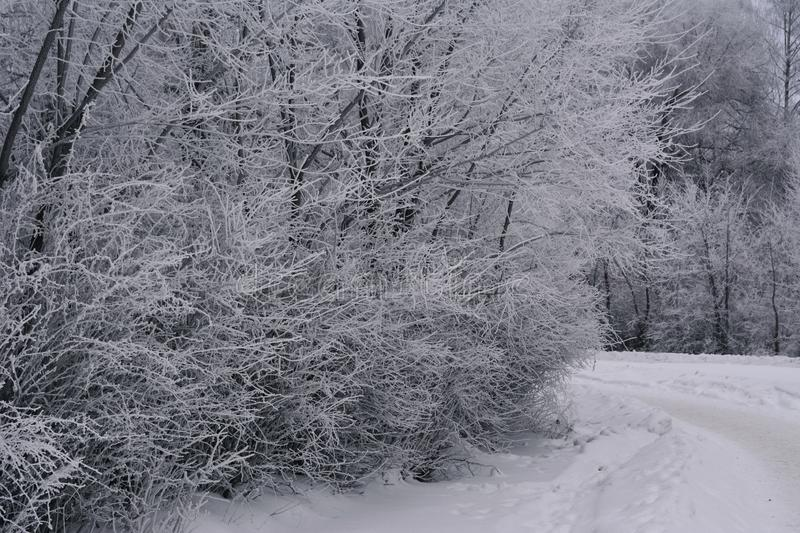 Winter scene with trees in hoarfrost. Snowy overcast day in city stock photos