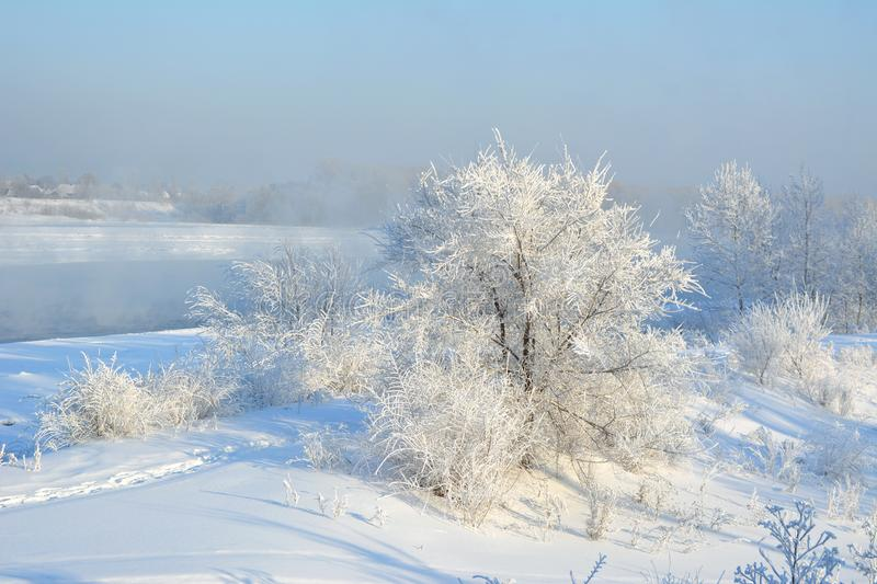Winter scene. Wonderland with trees covered by white snow stock photography