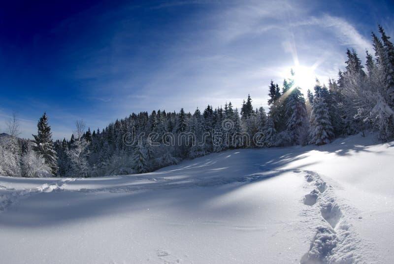Winter scenery bathing in sunrays stock photography
