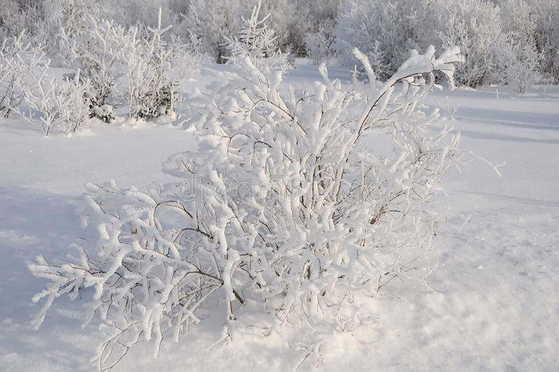 Scenery winter photo.  Winter scenery displaying snow on frosted trees and ground. Tranquility scenery. Winter scenery displaying its white blanket on trees and royalty free stock photography