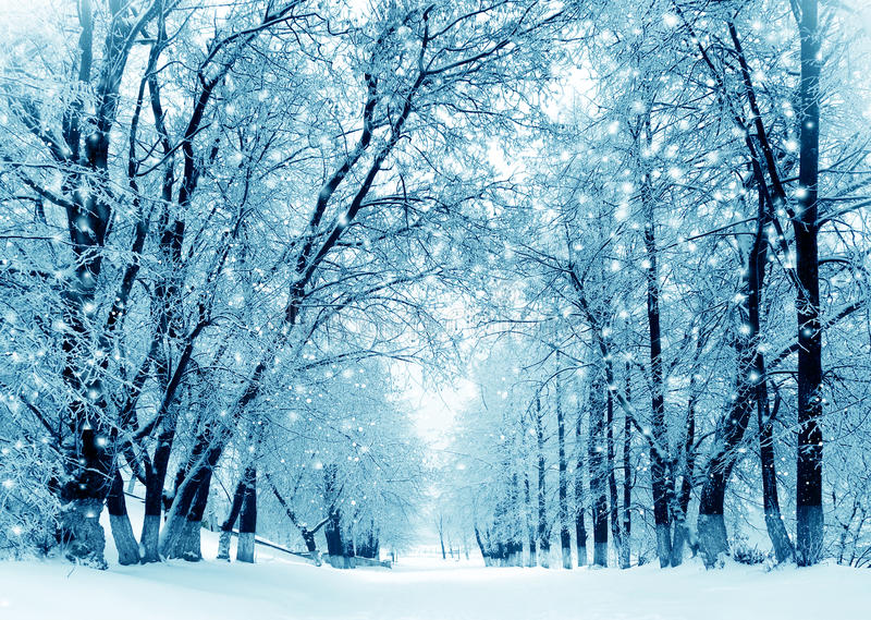 Winter scenery, frosty trees in park stock photos
