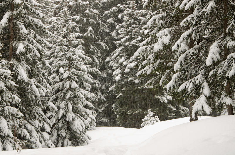 Download Winter Scenery, Haute Savoie, France Stock Photo - Image: 22150070