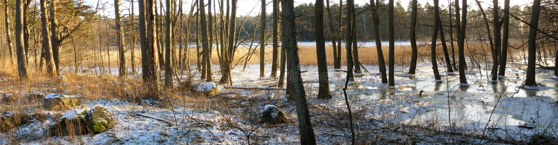 Winter scenery panorama stock image