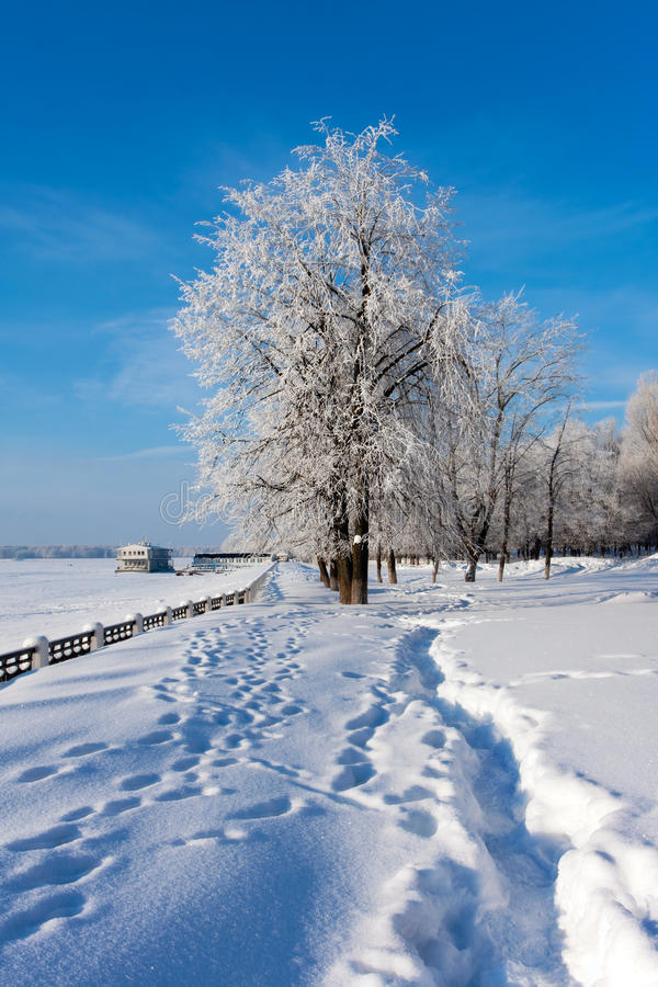 Download Winter  scenery in park stock image. Image of natural - 22422365