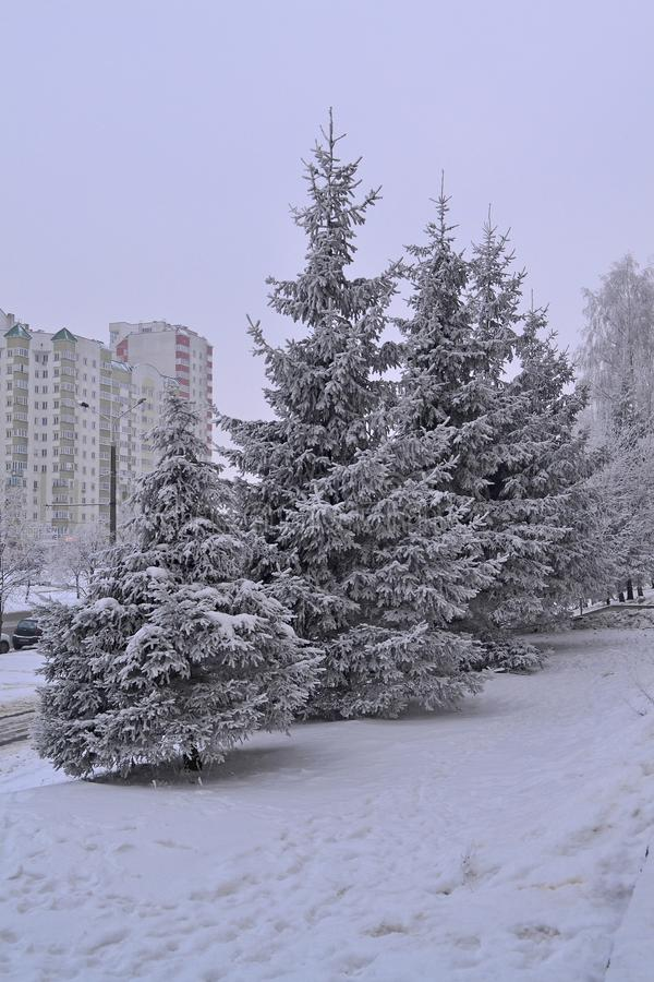 Winter scenery. Snowy weather. Scenic landscape of town. Green fir in winter city royalty free stock photography