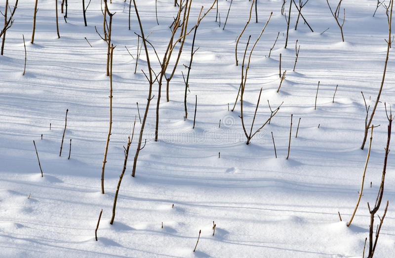 Download Winter Scenery - Young Sprouts Stock Image - Image: 23137581
