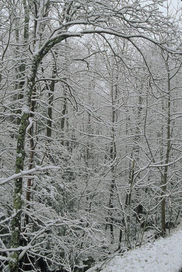 Winter Scenic, Smokies royalty free stock photos