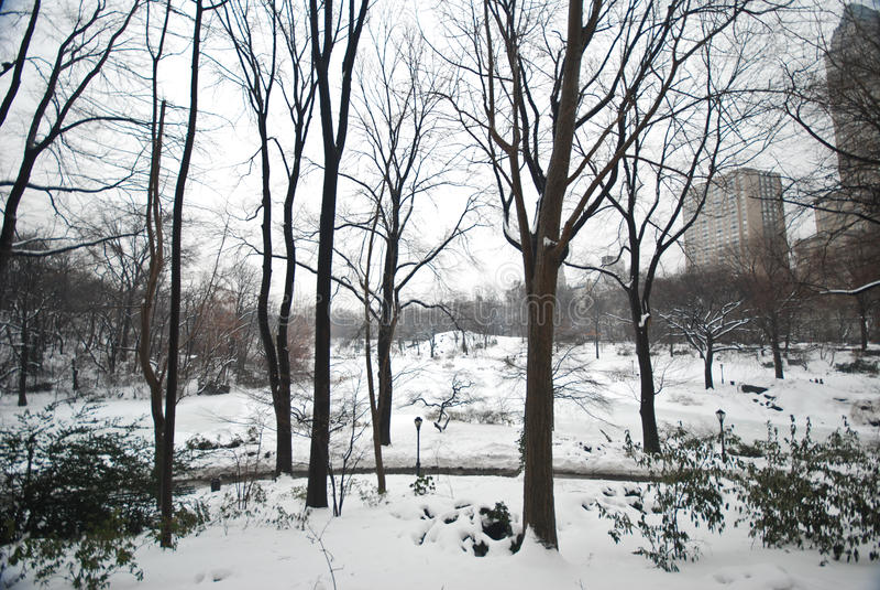 Winter-Schnee in Central Park, Manhattan lizenzfreies stockbild