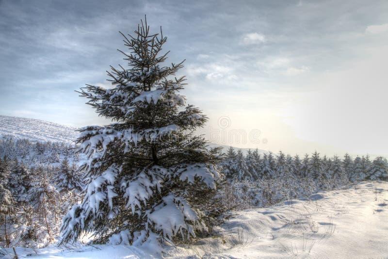 Winter-Schnee-Szene HDR stockfotos
