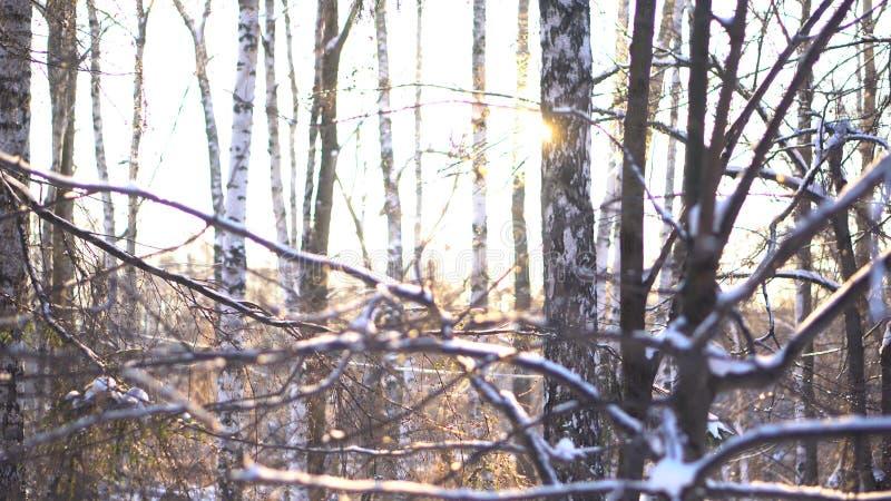 Winter, schneebedeckter Wald im Sonnenuntergang, Weihnachtshintergrund Winterwaldlandschaft und die Sonne, die aus Baumstämme her lizenzfreies stockbild