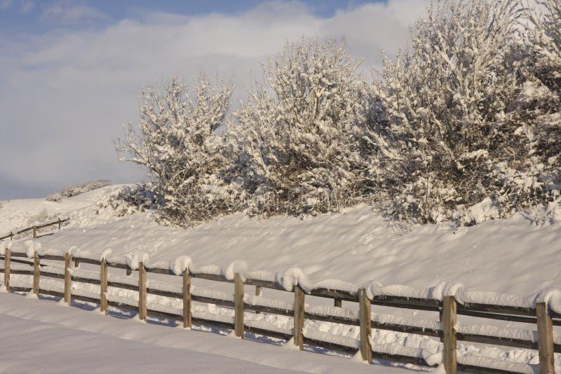 Winter-Schneelandschaft, Cardiff, Großbritannien stockbild