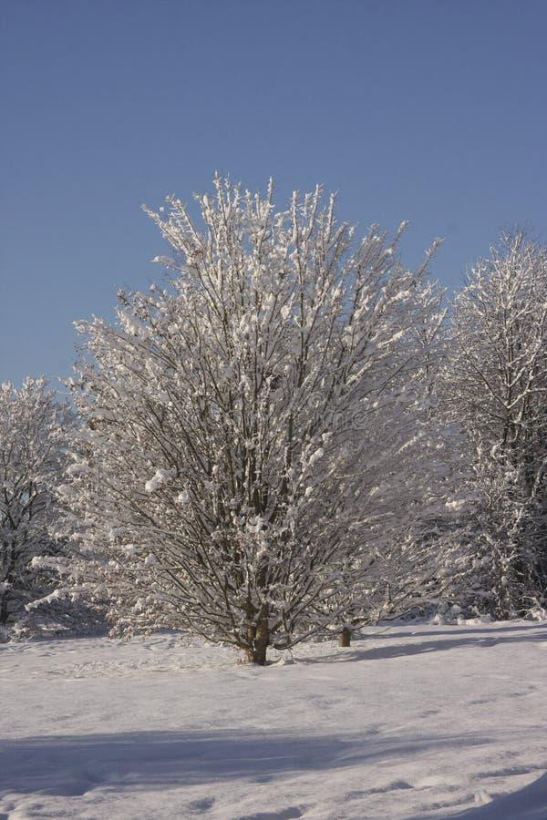Winter-Schneelandschaft, Cardiff, Großbritannien lizenzfreies stockfoto