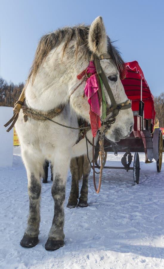 Winter-Schneewagen lizenzfreie stockfotos