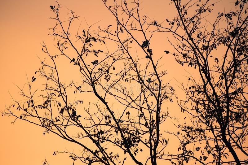 Winter season coming - silhouette of nude tree branches in orange sunset sky. France stock images